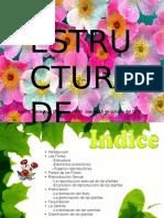 Conferencia Estructura de Las Flores