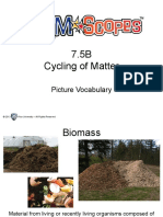 picture vocabulary cycling of matter