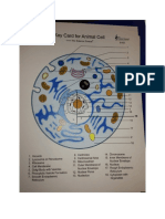 Cell Models (1) (1).docx