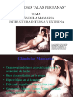 4.- Glándula Mamaria Estructura Interna y Externa