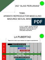 6.- Aparato Reproductor Masculino Madurez Sexual Imprimir