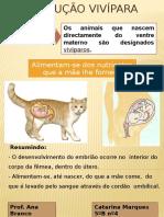 Reprodução Vivípara _catarina