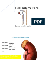 Fisiologia-renal Sin Color