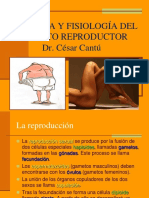 Apart Reproductor