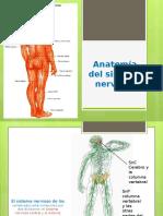 NuAnatomia del sistema Nervioso Autonomo