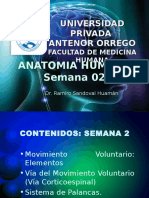 Anatomia Semana 02