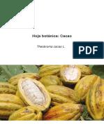 Hoja Botanica Cacao