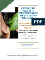 Informe Del Cultivo Del Maíz
