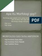 Morfologi Gigi