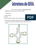 Estrutura RNA