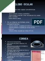 Anatomía Del Ojo (MELINA)