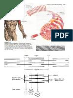 Struktur,Sifat Dan Komponen Oto Skelet (BK)