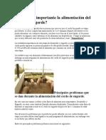 Por Qué Es Importante La Alimentación Del Cerdo de Engorde
