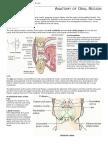 Anatomy of Oral Region