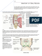 Anatomy of Oral Region