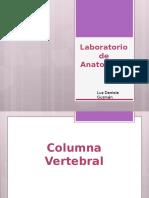 (I)Laboratorio de Anatomia II Osteologia Columna Lumbar