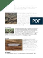 Agricultura incaica.docx