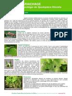 Se Proteger de Spodoptera Littoralis Janvier 2015