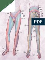 Dermatome s