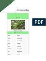 Gevuina avellana_  avellana  chilena - argentina..docx