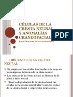Células de La Cresta Neural