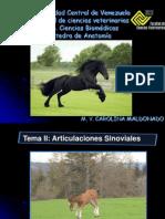 Clase Sindesmologia Art. Sinovialespdf