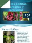 Plantas Epifitas, Parásitas y Carnívoras - Copia