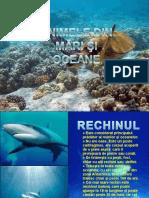 Animale Din Mari Si Oceane1