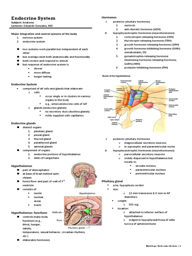 Histology Endocrine System Adrenal Gland Pituitary Gland