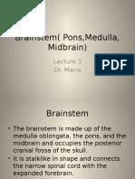 brainstem.pptx
