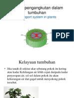 2.3 Sistem Pengangkutan Dalam Tumbuhan