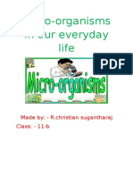 Microorganisms in Our Everyday Life