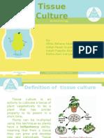 Culture Tissue