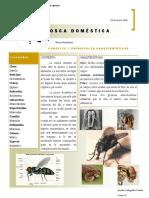 g24_JenniferGalleguillos_MuscaDomestica