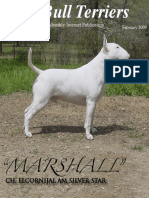 Bull Terrier Magazine