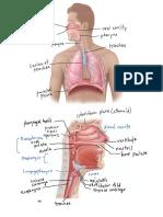 Respiratory Diagrams
