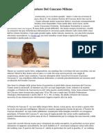 Vendita Cuccioli Pastore Del Caucaso Milano