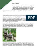 Cucciolo Di Pastore De Caucaso