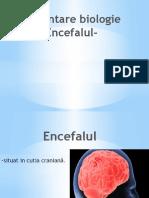 Prezentare biologie -Encefalul-