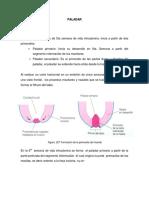 paladar hendido.pdf