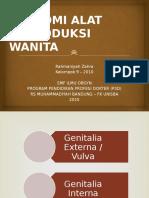 CSS Anatomi (Rahma) OBGYN