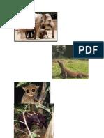 Bahasa Jawa Gambar