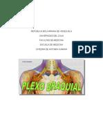 Plexo Braquial- Anatomia Humana