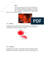 glóbulos rojo