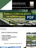Primeira Aula Prática- Cultivo de Plantas em Ambiente Protegido