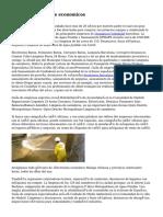 Desatascos Alicante economicos