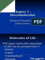 Ch 5 - Marcomolecules