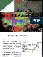 Sistema Nervioso Curso MTC