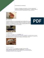 Animales en Peligro de Extinsion en Guatemala