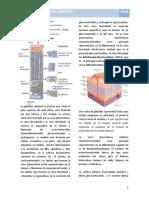 15. Glándula Adrenal - Fisiología I